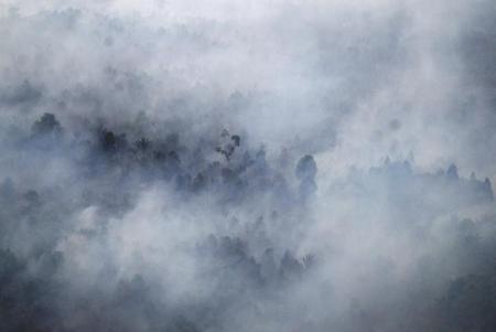 إندونيسيا: فتوى تحرّم حرق الغابات