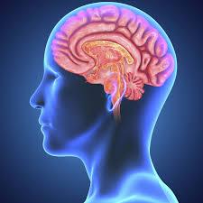 دراسة: حتى الاعتدال في شرب الخمر يؤثر على وظائف المخ