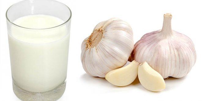 فوائد الحليب مع الثوم و وصفاته الصحيه