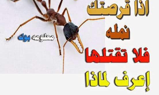 إذا قرصتك نملة ،،، لا تقتلها !!! بل اشكرها