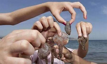 متى تكون عضة قنديل البحر خطيرة ؟