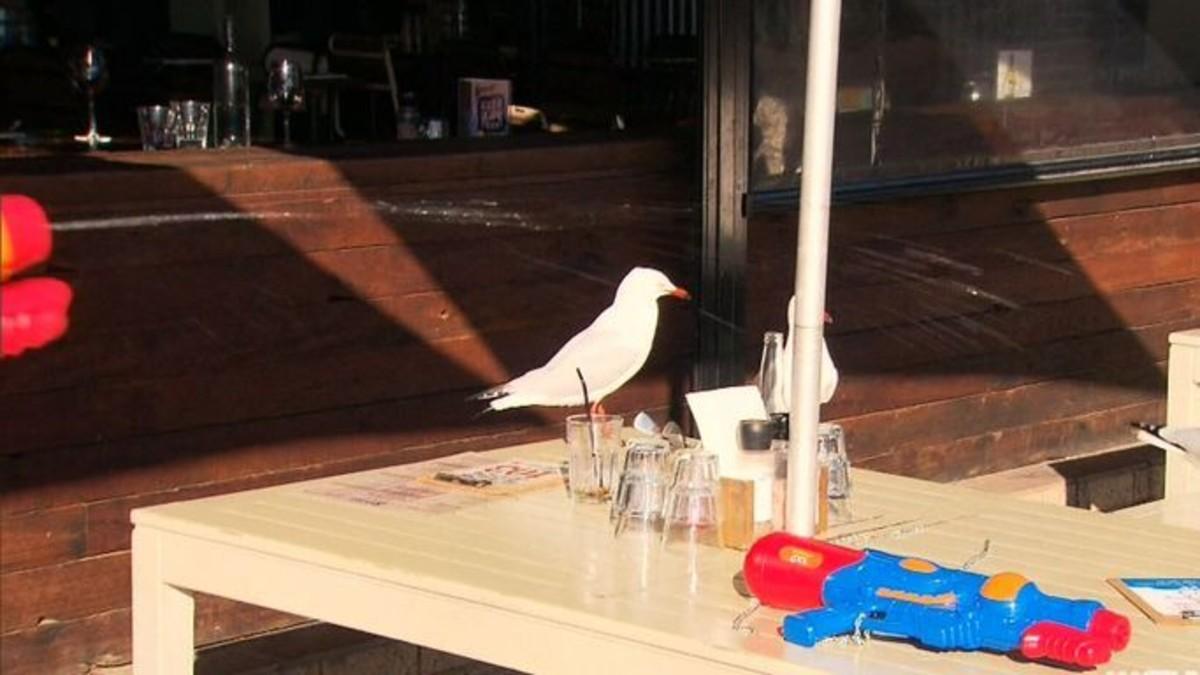 في استراليا مطعم يزود زبائنه ببنادق مياه والسبب ؟؟