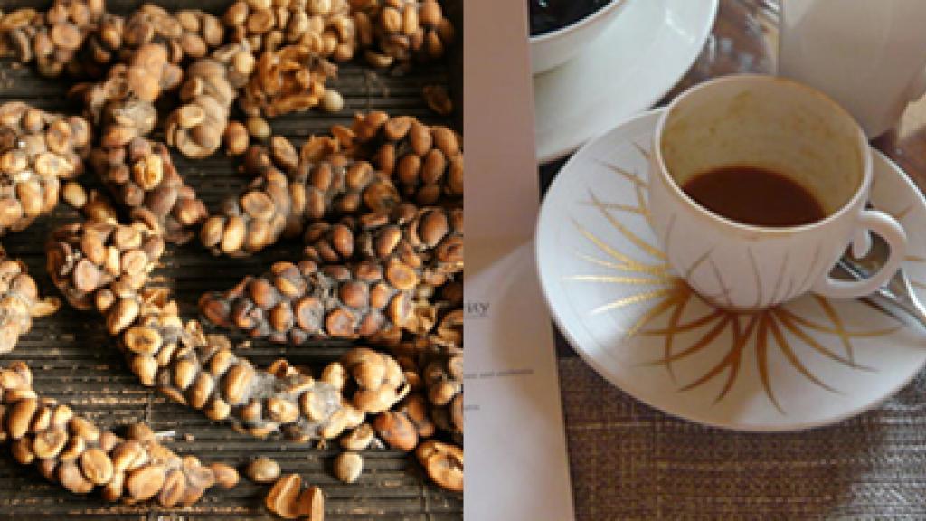هل تعلمون أن أغلى قهوة في العالم تحضّر من… البراز؟