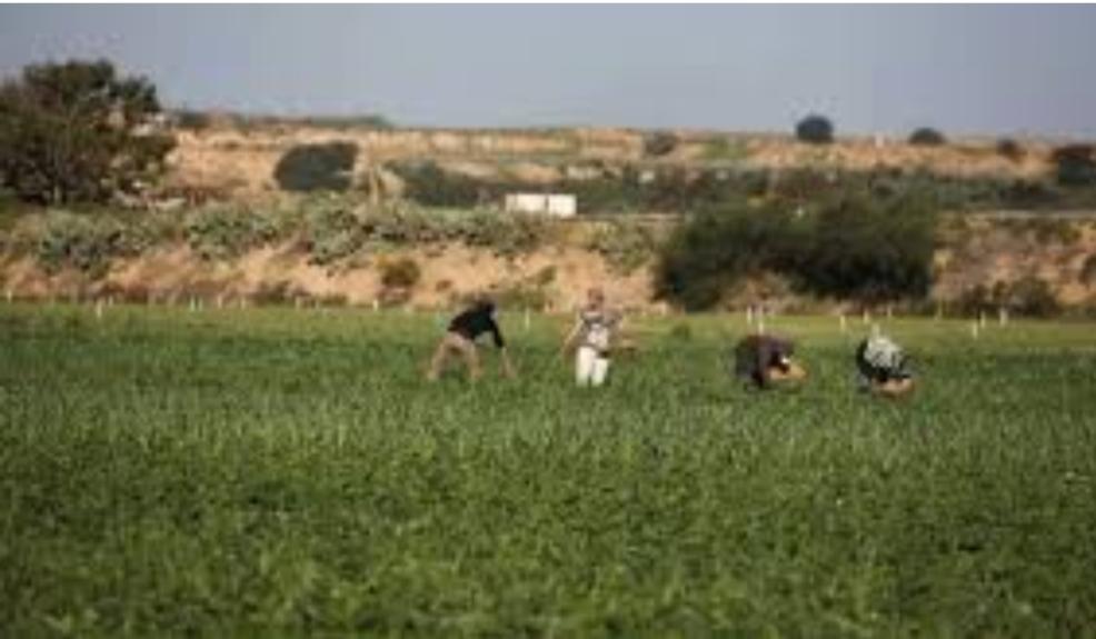 تيسير خالد يحذر من مخاطر تسرب زيتون المستوطنات الى المصانع الفلسطينية