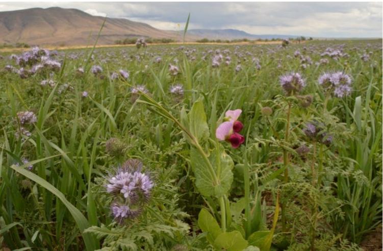 التربة السليمة هي العامل الأساسي لإطعام العالم