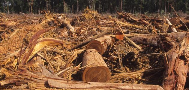 التصحر يزيد في غابات الأمازون في حكم بولسونارو إلى أقصى حد منذ 11 عاما
