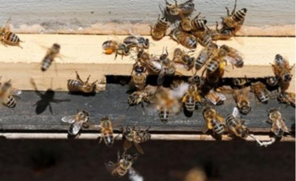 انقراض الحشرات يهدد الحياة على الأرض