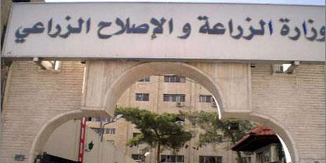 ضمن خطتها السنوية.. سورية تحيي عيد الشجرة بحملات التشجير