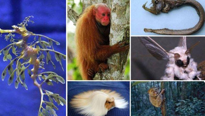 أغرب الحيوانات في العالم