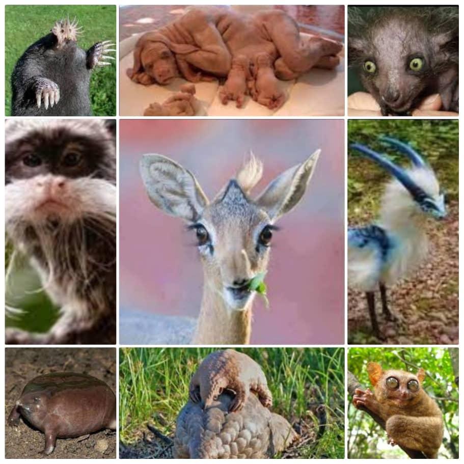 أغرب الحيوانات في العالم بالصور
